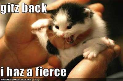 Kitten Handling