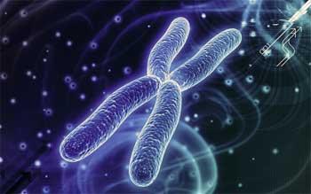 Human DNA and Evolution