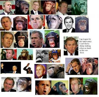 Bush and Ape